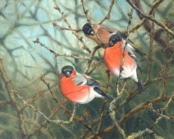 Budding Bullfinches