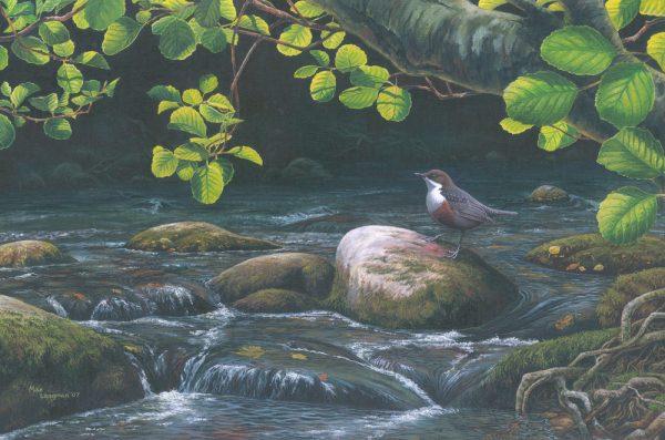 Dipper, Stream