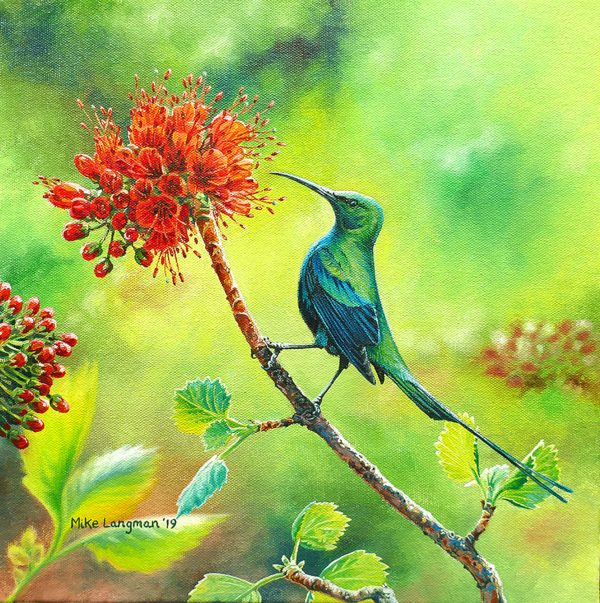 Malachite Sunbird, South Africa
