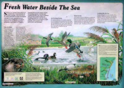 Interpretive Sign - Slapton Ley